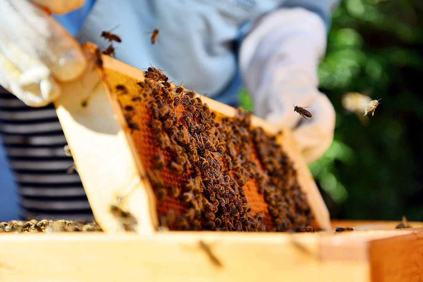 new medium beekeeping bee keeping observation bee hive