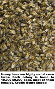 7-5-12-Bees-in-a-Hive-REVISED