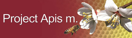 Image result for project apis m logo