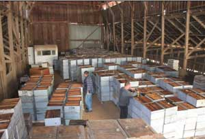 Beekeepers Inspect a barn full of dead-outs in Oakdale, CA (photo Kyle Anderson)