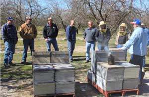 Representatives of bee industry, almond industry, and EPA exam hives in the California almond fields. (photo Kyle Anderson)