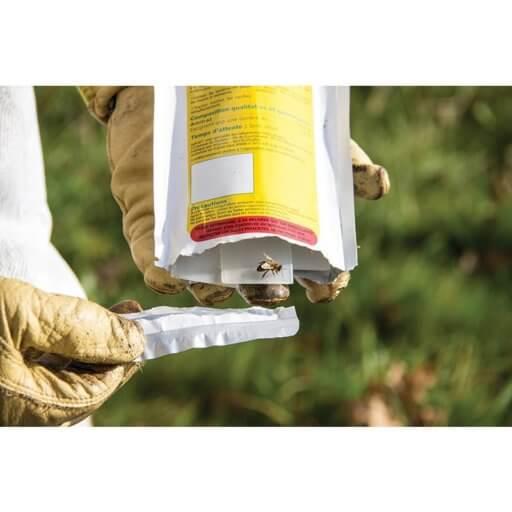 Beekeeper treating varroa mite infestation