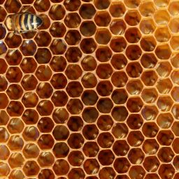 Dadant Beekeeping Equipment