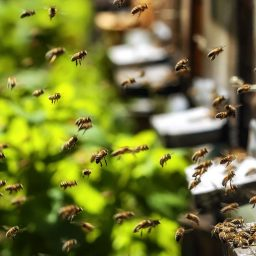 the hive and they honeybee