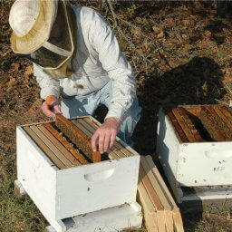 Adding Nucs to a New Hive
