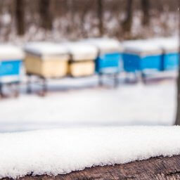 winter prep bee colonies