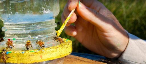 2019 USA PAm-Costco Scholar Fellowship Awards for Honey Bee