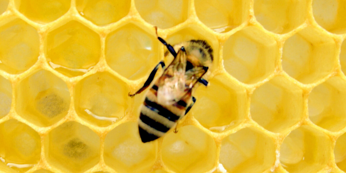 harvesting supers from a honeybee hive