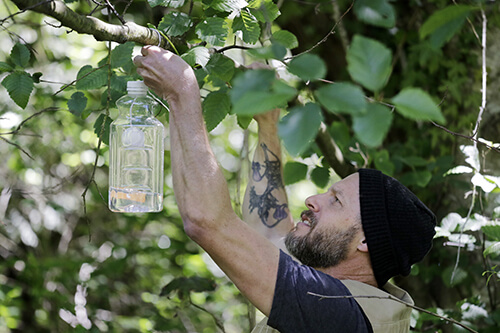 trap used to search for the Asian giant hornet